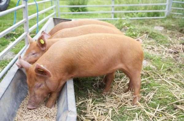 Просроченные товары можно продавать для корма животным