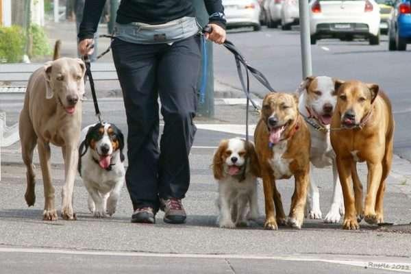 При условии, что выгуливаемые вами питомцы здоровы, они могут гулять все вместе в одно и то же время