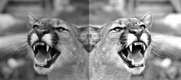 яркое черно белое фото в фотошопе