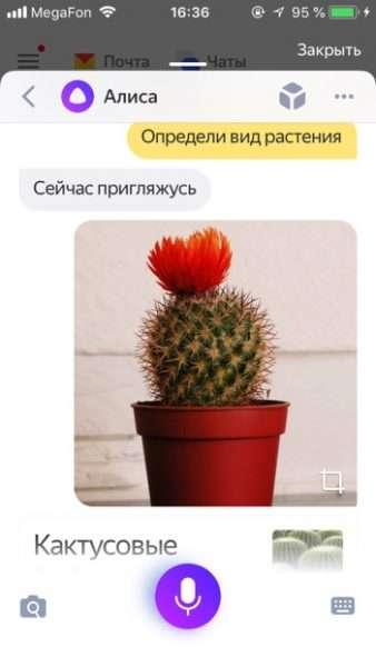 Определение растения