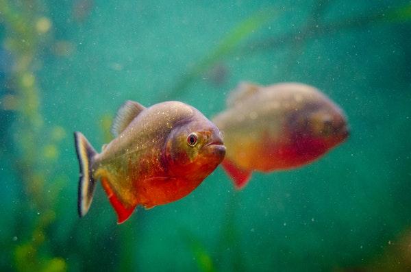 Разведение и реализация аквариумных рыбок